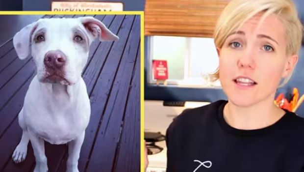 Hannah Hart - favorites of the moment